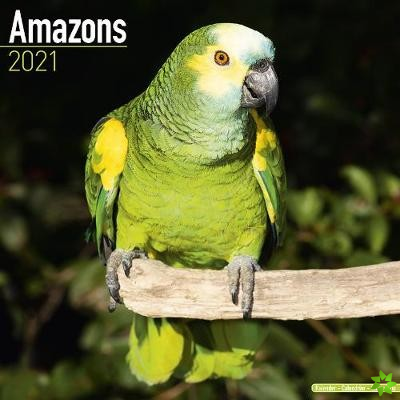 Amazons 2021 Wall Calendar