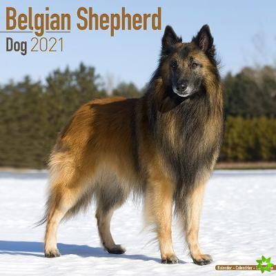 Belgian Shepherd Dog 2021 Wall Calendar