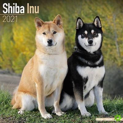 Shiba Inu 2021 Wall Calendar