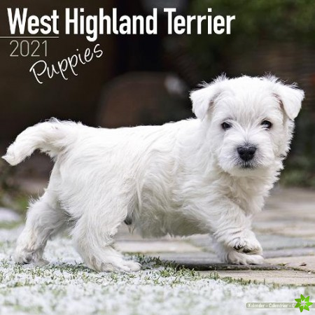 West Highland Terrier Puppies 2021 Wall Calendar