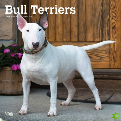 BULL TERRIERS 2021 SQUARE