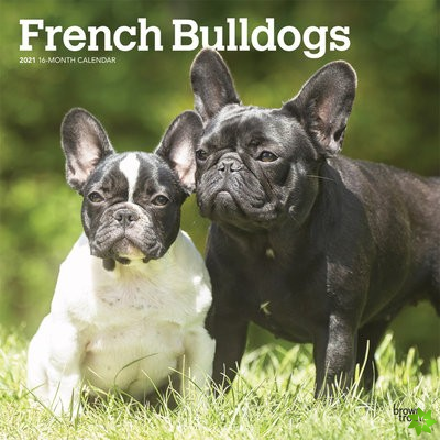 FRENCH BULLDOGS 2021 SQUARE