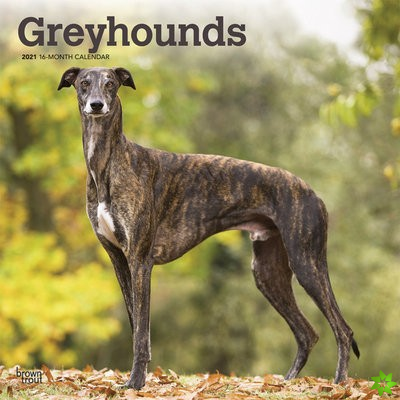 GREYHOUNDS 2021 SQUARE
