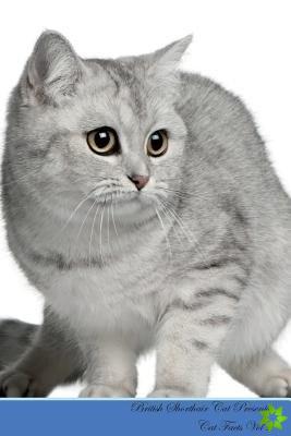 British Shorthair Cat Presents