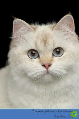 Colorpoint Shorthair Cat Presents