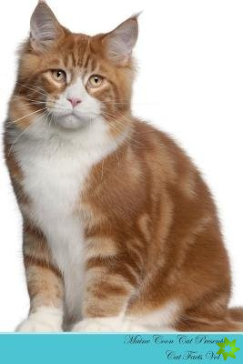 Maine Coon Cat Presents