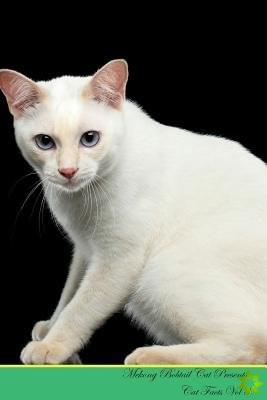 Mekong Bobtail Cat Presents
