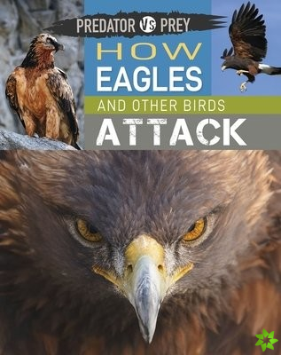 How Eagles and other Birds Attack