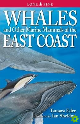 Whales and Other Marine Mammals of the East Coast