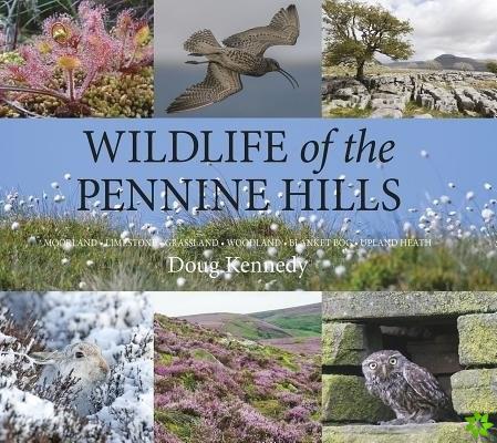 Wildlife of the Pennine Hills