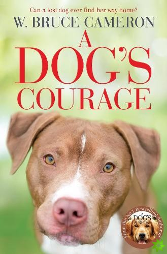 Dog's Courage