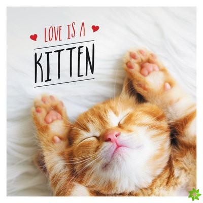 Love is a Kitten